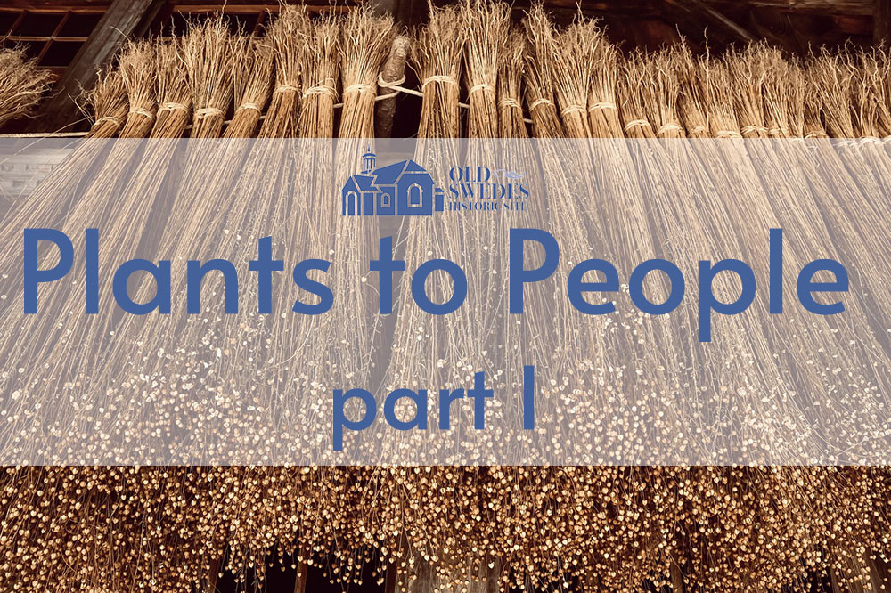 """A picture of flax with Old Swede's logo and the title """"Plants to People, part one"""""""